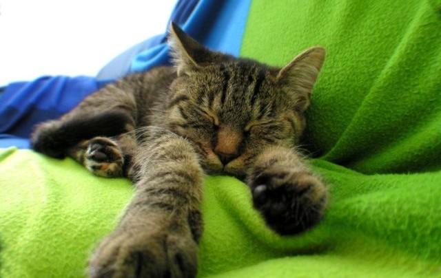 Чудесный способ хорошо выспаться