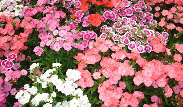 Любовь подобна цветам