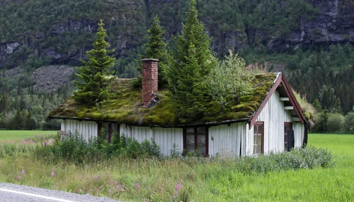 Домашняя экология