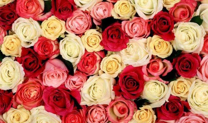 Что можно подарить девушке на День святого Валентина