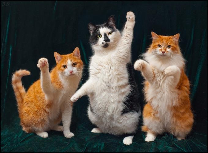 Какие корма для кошек можно купить в магазине?