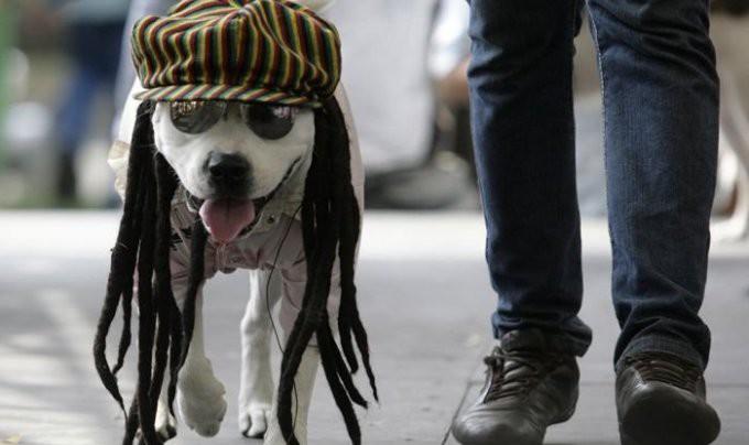 Комбинезоны и халаты для собак