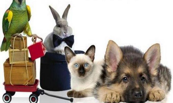 Виртуальный магазин для животных