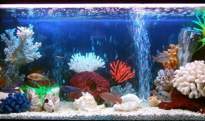 Красивый домашний аквариум — это чудо