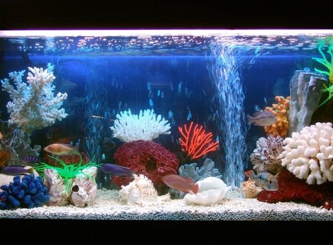Красивый домашний аквариум - это чудо!