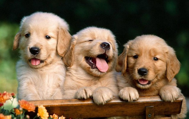 Пиометра у собак: как распознать и предупредить болезнь