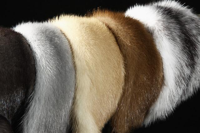 Шкурки норки – для шубы