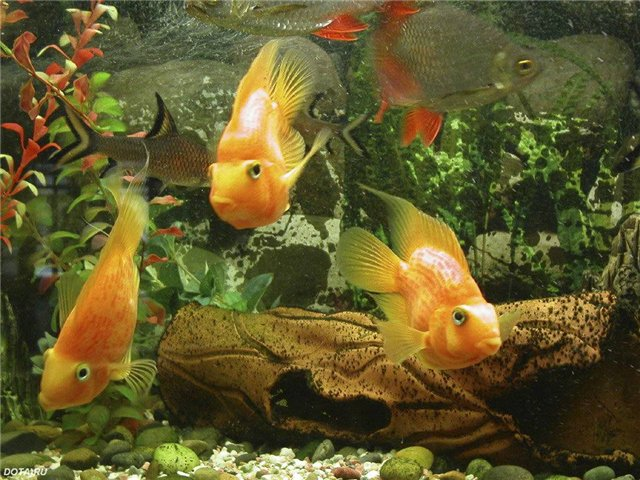 С чего начать, если вы хотите приобрести аквариум с рыбками