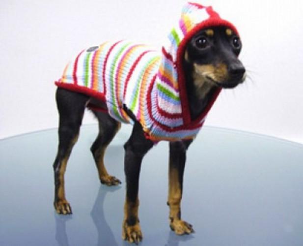 Модная одежда для собак myzooshop.ru