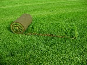 Выбираем качественный рулонный газон