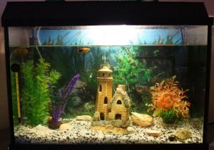 Чистый аквариум — без проблем